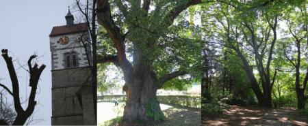 Beratung Baumpflege, Thomas Rein, Maßnahmen Baum
